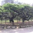 高松 栗林公園 1